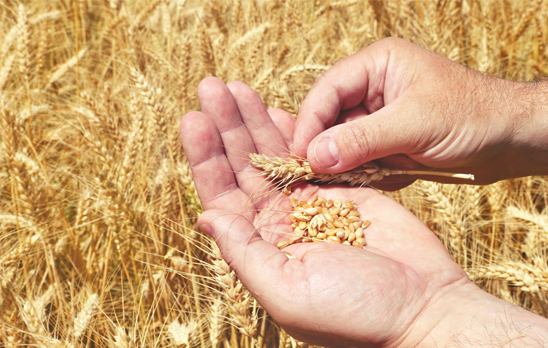 Core Grain intake and payments